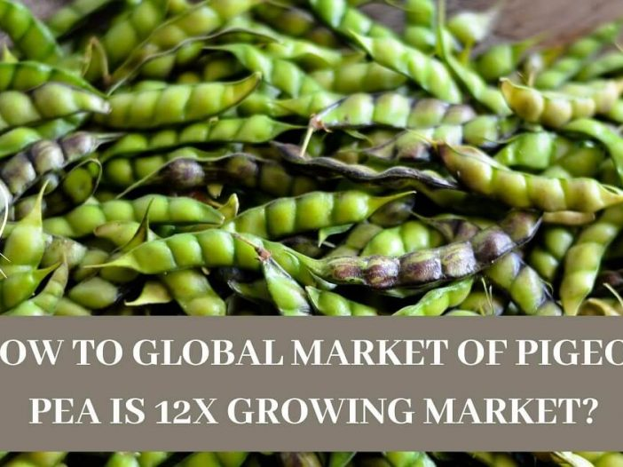 How To Global Market of Pigeon Pea Is 12x Growing Market